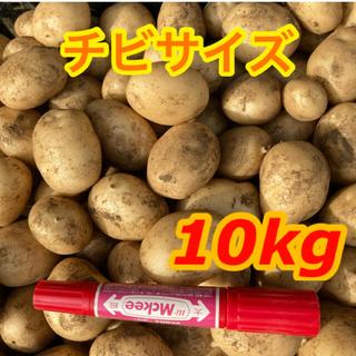 農家直送★新じゃが じゃがいも トヨシロ 10kg チビ   野菜
