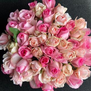 バラ・切り花・生花*ピンクアレンジMIX*50本 長さ30㎝SMサイズ 産地直送(その他)