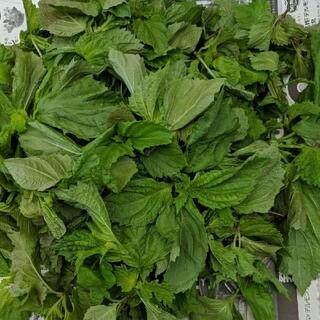 2-13 無農薬 青しそ ジュース ペースト用 約120g(野菜)