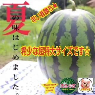 初めての感動をお届けします☆鳥取産西瓜の匠厳選ブランド西瓜(超特大サイズ1玉)(フルーツ)