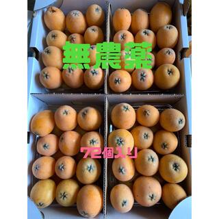 和歌山県海南市産 無農薬 茂木びわ サイズ混合約2.4kg  72個入り(フルーツ)