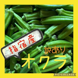 オクラ 訳あり 45本(野菜)
