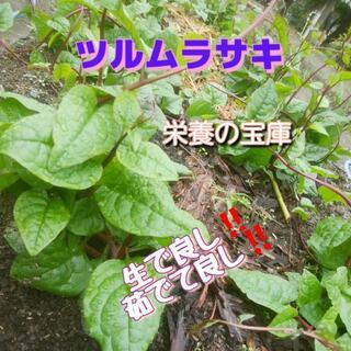 送料無料*静岡県産*無農薬*ツルムラサキ*つるむらさき*葉*ネコポスいっぱい(野菜)