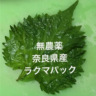 しその葉 大葉 無農薬 奈良県産(野菜)