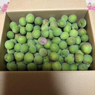 青梅南高梅 無農薬 手摘み 3キロ(野菜)