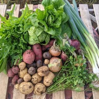 無農薬野菜セット fickle beat(野菜)