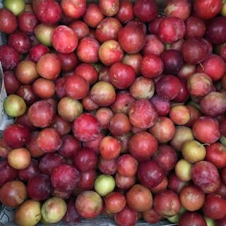 無農薬すもも 小粒 4.5キロ(フルーツ)