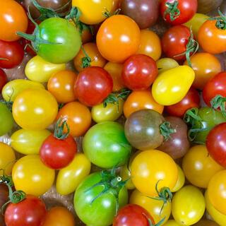 カラフルミニトマト箱込み2キロ(クール便)(野菜)