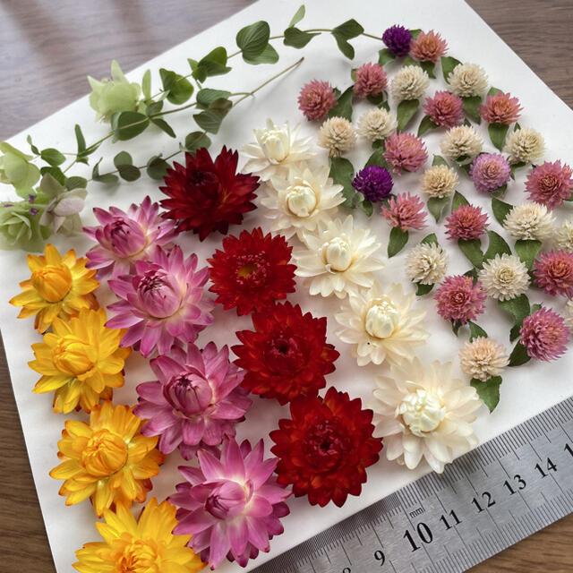 貝細工&千日紅ドライフラワー ハンドメイドのフラワー/ガーデン(ドライフラワー)の商品写真