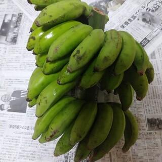 幻の高級島バナナ小笠原種 農薬不使用 激レア南国フルーツ希少果物 特産物 (フルーツ)