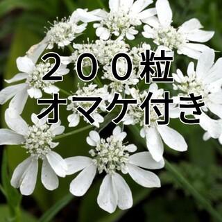♥花の種 オルレア イングリッシュガーデン