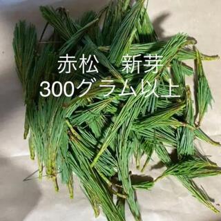 赤松 新芽 松葉  300g以上 土日発送
