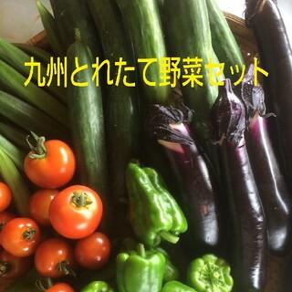 無農薬野菜 詰め合わせ