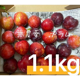 ただいま1.1キロ!!無農薬 プラム 愛知県産