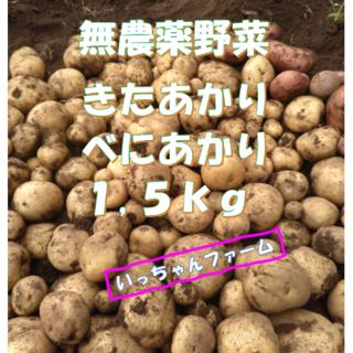 安全・安心野菜 新ジャガイモ きたあかり&べにあかり 1,5kgより