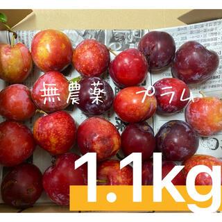 無農薬 プラム 1.1キロ(フルーツ)