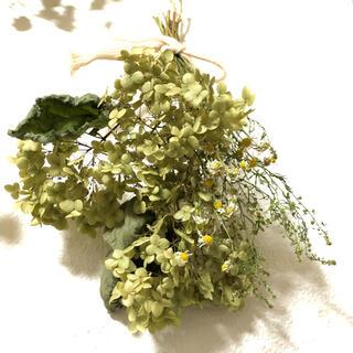 グリーンアナベルとカモミールの香りスワッグ K(ドライフラワー)