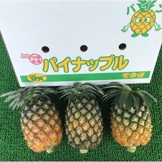 [石垣島産] パイナップル ハワイ種2.5kg~2.3個入り[産地直送](フルーツ)