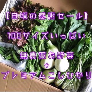 数量限定【日頃の感謝♡セール】100サイズいっぱい無農薬野菜と自慢のお米セット
