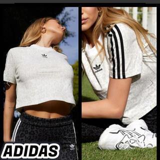 adidas - 𓊆 新品 クロップド Tシャツ Mサイズ アディダスオリジナルス 𓊇