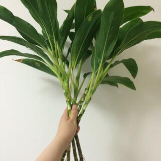 観葉植物(置物)