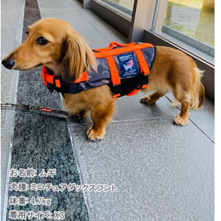 ドッグデプト(DOG DEPT)のわんちゃん用 DOGDEPT ライフジャケット 犬用(犬)