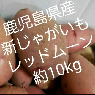(無農薬)鹿児島県産新じゃがいもレッドムーン約10kg(野菜)