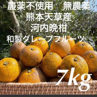 農薬不使用 無農薬 河内晩柑 和製グレープフルーツ 7kg(フルーツ)