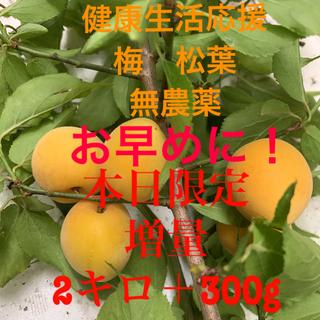 梅 松葉 無農薬本日限定増量2.3キロ健康応援セット梅ジャム 煮梅 松葉ジュース(フルーツ)
