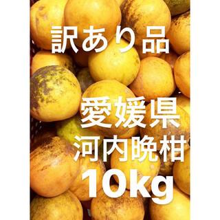 訳あり品 愛媛県 宇和ゴールド 河内晩柑 10kg(フルーツ)