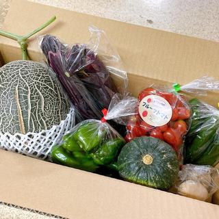 家庭用肥後グリーンメロン&野菜セット 送料込(野菜)