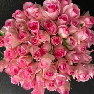 バラ (切り花・生花)ベラヴィータ(縁が濃いピンク)30㎝SM 50本 産地直送(その他)