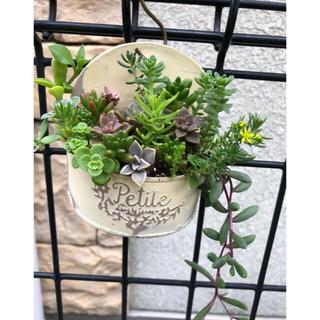 専用❤︎多肉植物❤︎寄せ植え❤︎このまま飾れます+ミニチュアセット(その他)