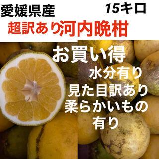 愛媛県産 超訳あり河内晩柑15キロ