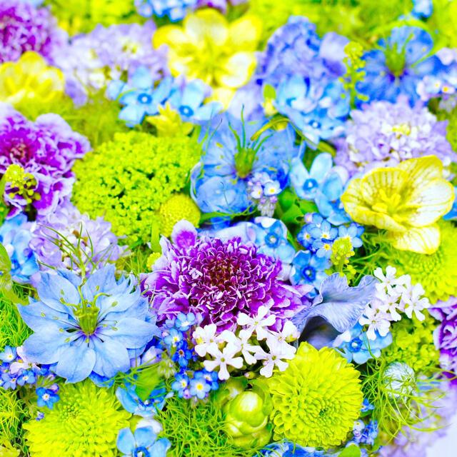 【ずっと大人気!】ニゲラ☆クロタネソウ 種 カラフルミックス350粒超! ハンドメイドのフラワー/ガーデン(プランター)の商品写真