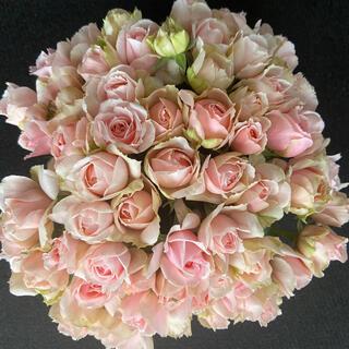 バラ(切り花 ・生花)エレガントドレス 30㎝SMサイズ 50本 産地直送!(その他)