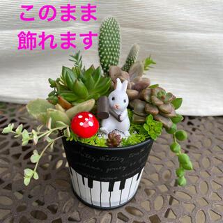 多肉植物 寄せ植え サボテン ウサギ ご希望で育て方メモ(その他)