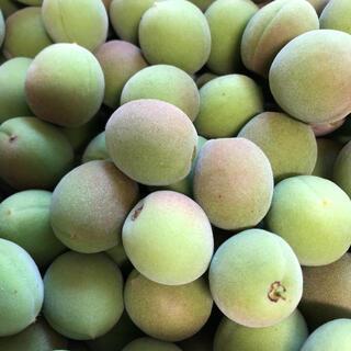 【採りたて】無農薬小梅 青梅 約1.2㎏以上 信州産(フルーツ)