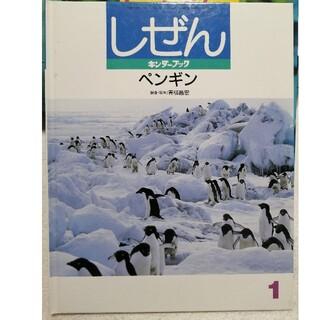 キンダーブック しぜん フレーベル館(絵本/児童書)