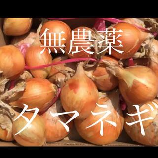 無農薬 新玉ねぎ 青紫蘇(野菜)