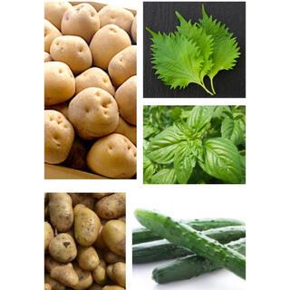 無農薬 野菜詰め合わせ 1.5kg 〜 2kg  日替わり 彩り野菜(野菜)