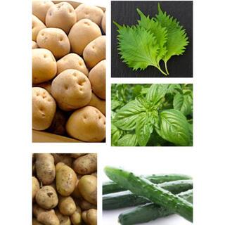 無農薬 野菜詰め合わせ 2.5kg 〜 3kg  日替わり 彩り野菜(野菜)