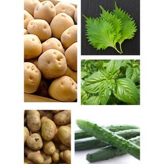 無農薬 野菜詰め合わせ 3.5kg 〜 4kg  日替わり 彩り野菜(野菜)