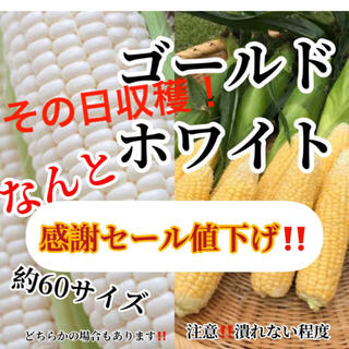 セール送料無料‼️農家直送60サイズゴールドホワイト入るだけ(野菜)