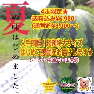 残3玉!初めての感動をお届けします☆西瓜の匠厳選鳥取ブランド西瓜(超超特大1玉)(フルーツ)