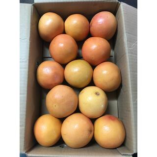 南アフリカ産グレープフルーツスタールビー13個入り(フルーツ)