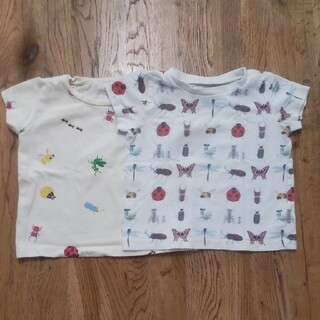 Insect Collection  Tシャツ2枚 サイズS