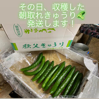 秩父きゅうり(野菜)
