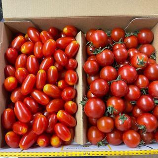 フルーツトマト ミニトマト 2種詰 1K 合わせ コンパクト便(野菜)