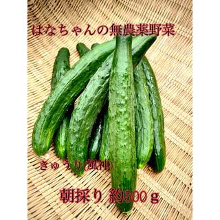 はなちゃんの無農薬野菜 きゅうり500g(野菜)